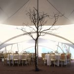 Bare tree inside a marquee