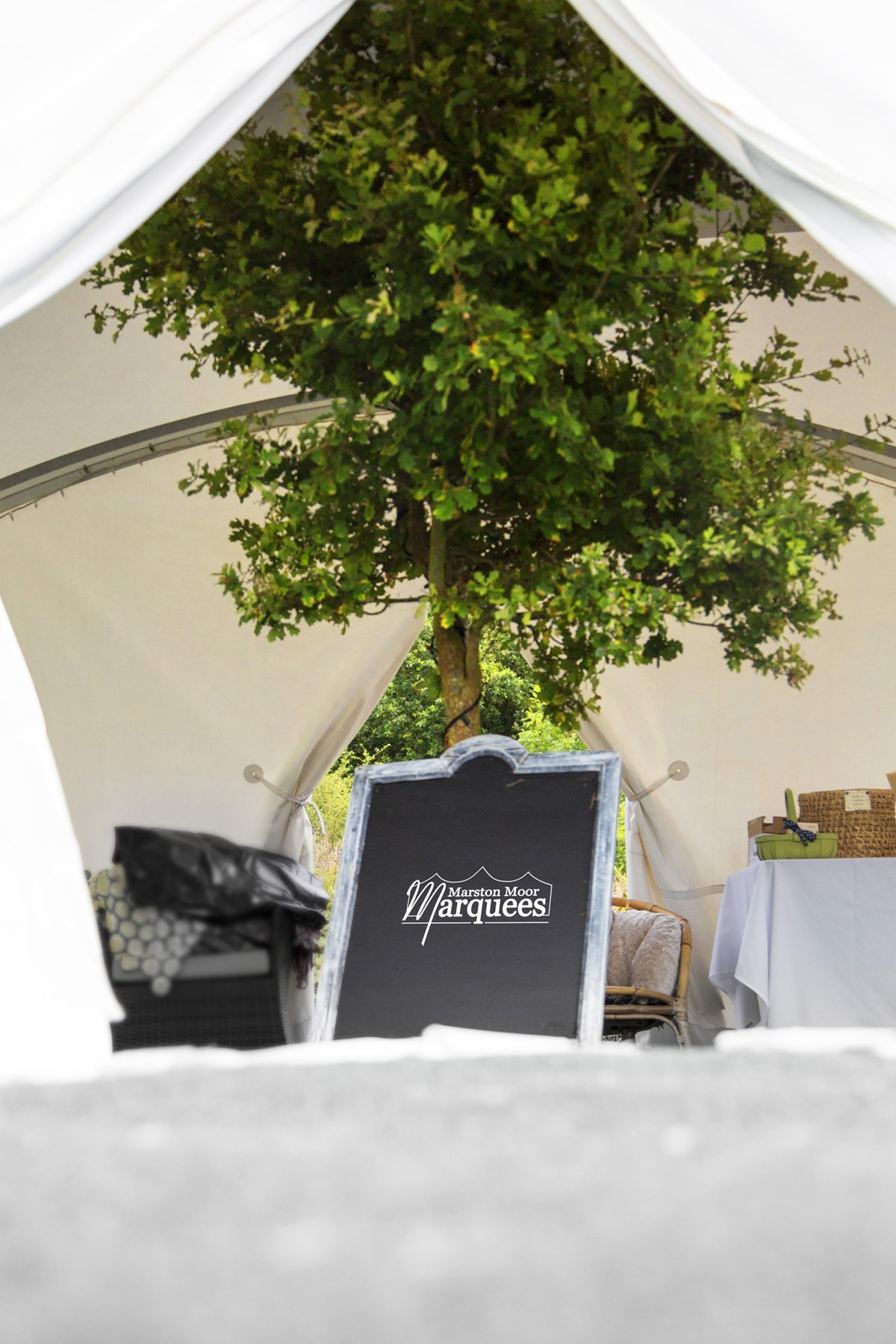 A tree inside a marquee